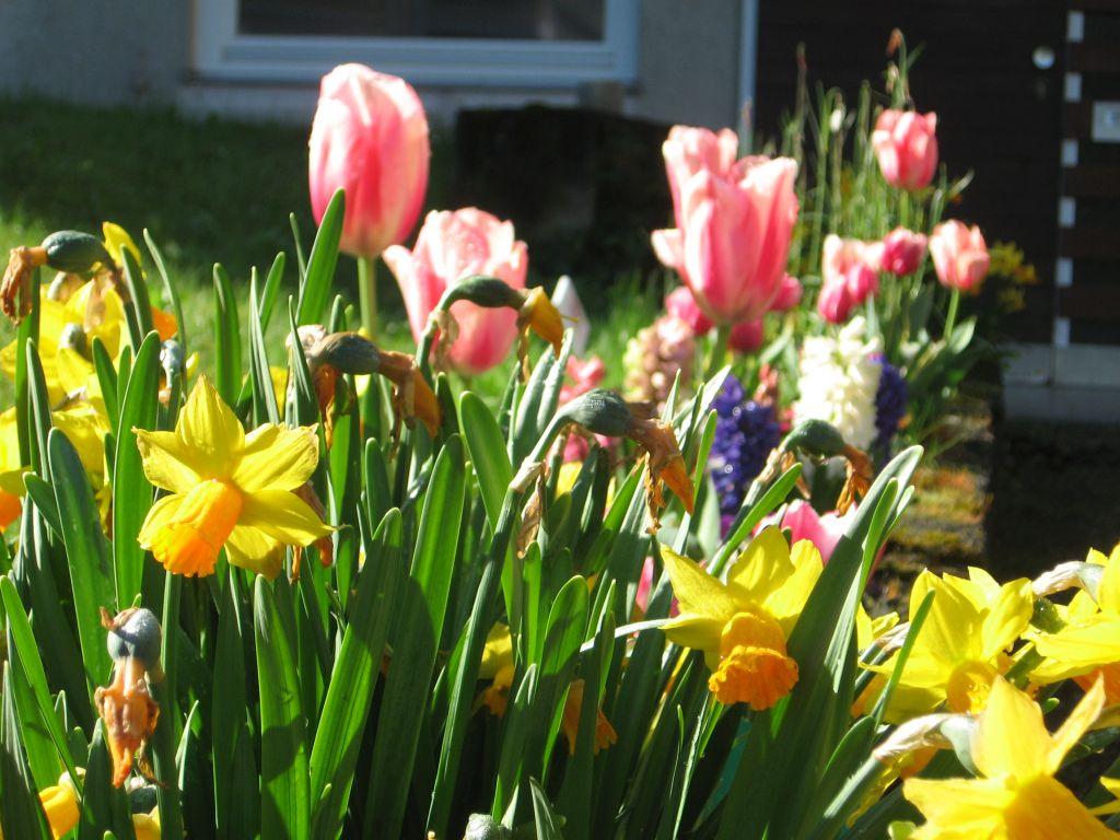 Der Frühling an der Uhlandschule